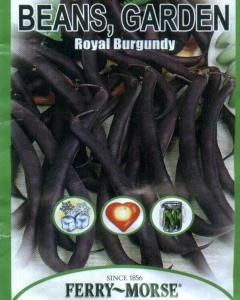 6 - Royal Burgundy Bush